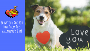 Show your dog you love them this Valentine's Day