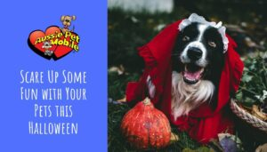 Scare Up Some Fun with Your Pets this Halloween Oct 2021
